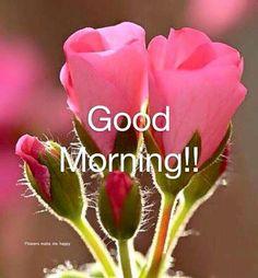 Good Morning Pink Roses morning good morning morning quotes good morning quotes morning quote good morning quote spring good morning quotes