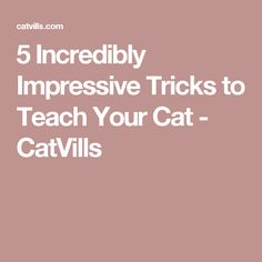 5 Incredibly Impressive Tricks to Teach Your Cat - CatVills