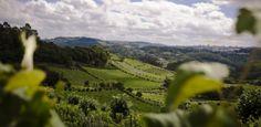 vale-dos-vinheiros-no-rio-grande-do-sul-de-onde-se-exportam-vinhos-para-a-alemanha-1368240489217_615x300