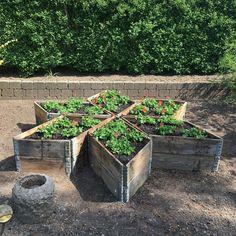 Garden Beds, Garden Art, Garden Plants, Outdoor Projects, Garden Projects, Farm Gardens, Outdoor Gardens, Container Gardening, Gardening Tips