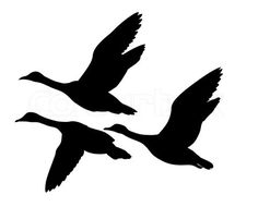 Image of 'vector silhouette flying ducks on white background'