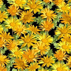 Sunshower Quilt Fabric Yellow Daisies Floral OOP 100% Cotton Sewing Crafts #SouthSeaImports