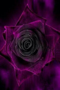 Purple Rose My Favorite Color, Postcards