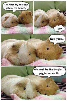 Oh, the peegs... <3