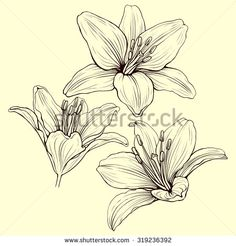 stock-vector-three-line-lily-flowers-in-ink-style-drawing-319236392.jpg…