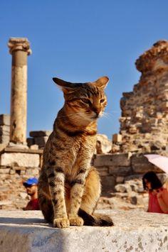 A sweet looking cat enjoys the winter sun in Ephesus, Turkey.
