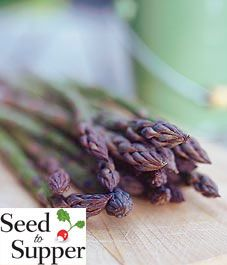 Take advantage of asparagus season-growing asparagus in Canada Perennial Vegetables, Growing Vegetables, Fruits And Vegetables, Asparagus Plant, Asparagus Seasoning, Winter Plants, Gardening Tips, Vegetable Gardening, Fruit And Veg