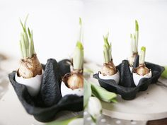 mein Feenstaub – DIY, Deko und Rezepte: {DIY} Osterdeko in zwei Varianten: mit Blumenzwiebeln und Kakteen