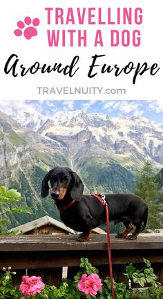 Your ultimate guide to travelling in Europe the most dog-friendly part of the world with a dog. Find out about rules for entry and travelling between countries the best transport options dining out dog-friendly accommodation and what to see. Backpacking Europe, Europe Travel Tips, Travel Advice, Travel Guides, Places To Travel, Travel Destinations, Travelling Europe, Travel Hacks, Dog Friendly Accommodation
