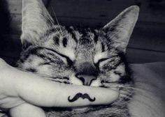 A cat with a moustache