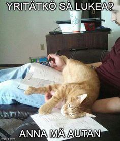 24 asiaa, jotka vain kissaihmiset ymmärtävät Animals And Pets, Reading, School, Funny, Word Reading, The Reader, Ha Ha, Hilarious, Entertaining