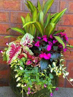 Container Garden Ideas For Shade - Gardenings Co - Gardenings Co