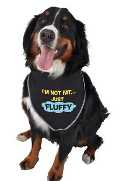 I'm Not Fat Just Fluffy Bandana - Ruff Ruff and Meow
