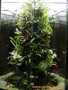 Lukasz from Poland |   http://www.dendroboard.com/forum/members-frogs-vivariums/15580-polish-customers-viv.html