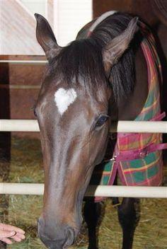 Valentines day-horse