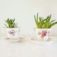 Plantje in kop en schotel