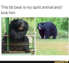 We Have Found Your Spirit Animal Memes) - World's largest collection of cat memes and other animals Cute Animal Memes, Animal Jokes, Funny Animal Pictures, Cute Funny Animals, Cute Baby Animals, Animal Pics, Stupid Funny Memes, Funny Relatable Memes, Hilarious