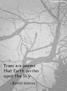 """""""Trees are poems that the earth writes upon the sky."""" ― Khalil Gibran, Sand and Foam Kahlil Gibran, Khalil Gibran Quotes, Earth Poems, Quotes On Earth, Schrift Tattoos, Tree Quotes, Just Dream, Friedrich Nietzsche, Nature Quotes"""