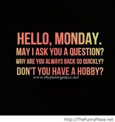 Hello animals pictures and quotes | Hello monday funny1 Hello monday funny Funny