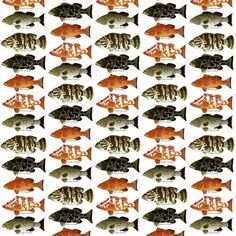Florida Grouper Species | Florida Keys Flats Slam With Tarpon Permit Bonefish On Furniture