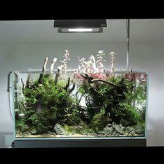197 best aquarium images aquarium pets aquariums rh pinterest com