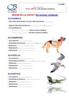 1r d'ESO NATURALS FITXA_UNITAT_4.Els animals vertebrats RESUM DE LA UNITAT: Els animals vertebrats ELS ANIMALS: - Són éssers pluricel.lulars, és a dir, estan f… Natural, Kids, Animals, Crafts, School, Vertebrates, Activities For Kids, Science, Reading