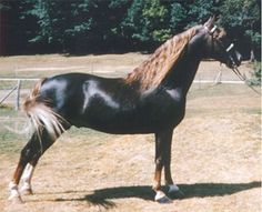 This is the Mustang Breed    Search via: Google http://free-extras.com  www.myrealhealth.com