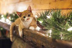 Lovely-KittyCats, photogenicfelines: (miss_n_arrow)