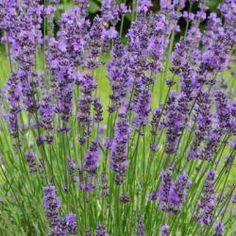 Drożdże do oprysków i jako nawóz. Jak je przygotować i jak działają - E-ogródek Flowers, Plants, Lawn And Garden, Plant, Royal Icing Flowers, Flower, Florals, Floral, Planets