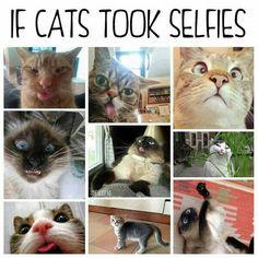 Haha kitty selfies