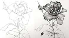 Pen and ink drawing of a rose flower Pen and ink drawing of a rose … Flower Art Drawing, Flower Drawing Tutorials, Floral Drawing, Painting & Drawing, Painting Tutorials, Outline Drawings, Pencil Art Drawings, Drawing Sketches, Sketching
