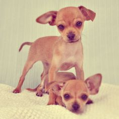 Cute puppies successfully adopted from Los Angeles, California rescue, the Amanda Foundation.