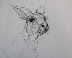 Animal Drawings Here is a quick twenty-minute pencil study of a kangaroo by photographer Jaclyn Kavanagh. I believe this drawing may make a fantastic drypoint print. Animal Sketches, Animal Drawings, Art Drawings, Drawing Faces, Contour Line Drawing, Contour Drawings, Drawing Tips, Drawing Ideas, Kangaroo Drawing