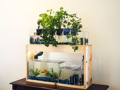Indoor Planter Garden, Live Plants, Aquarium Decoration, Herb Garden, Gardening Kit, Aquaponics, Herb Planter