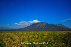 Baluran National Park, Situbondo East Java, Indonesia (little piece Africa in Java)