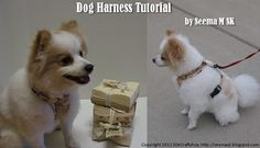 Make your own doggie harness....for the spoiled pup, that needs an extra special design!!