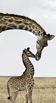 This makes me think of movement because I see the mothers neck and I automatically follow it to the babies head.