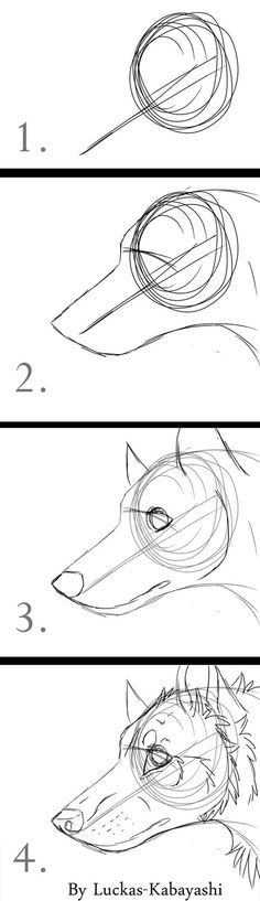 How to draw wolf/dog head (quick drawings) by LuckasK on DeviantArt