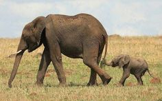 Mommy and baby elephant Babies,