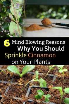 Mind Blowing Reasons Why You Should Sprinkle Cinnamon on Your Plants Indoor and outdoor plants benefit from the generous use of cinnamon to keep them healthy.Indoor and outdoor plants benefit from the generous use of cinnamon to keep them healthy. Garden Pests, Herb Garden, Easy Garden, Garden Tools, Outdoor Plants, Outdoor Gardens, Plants Indoor, Indoor Herbs, Indoor Outdoor