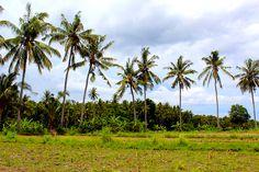 7/28(木)バリ島ウブドのお天気は晴れ。室内温度27.3℃、湿度71%。セミがミンミンと鳴き、気持ちの良い青空が広がってきました♪爽やかな風がヤシの木を揺らしています