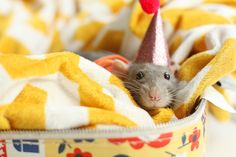 pet rat. addie would love this. ok..me too.