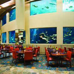 The Oceanarium Restaurant at the Pacific Beach Hotel in Waikiki, Honolulu, Hawaii! http://www.pacificbeachhotel.com/dining/oceanarium