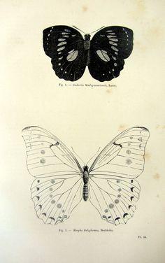 Papillons de vintage nice 1860 gravure, antique lepidoptera original PRINT, plaque de papillons insectes illustration, papillon entomologie.