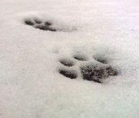 Eläinten jälkikortit Monet, Snow, Paw Prints, Science, Outdoor, Outdoors, Flag, Science Comics, Outdoor Living
