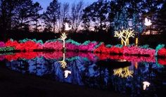 Over one million shimmering lights adorn Honor Heights Park at the annual Garden of Lights in Muskogee, Oklahoma.
