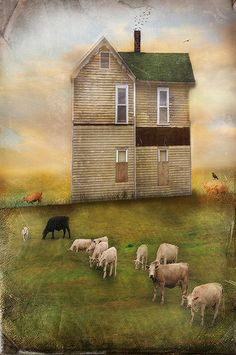 Apricot Skies & sheep in the field - Cheryl Tarrant Wisconsin, Illustration Art, Illustrations, Old Farm Houses, Arte Popular, Country Art, Naive Art, To Infinity And Beyond, Monuments
