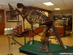 """Jeff the Giant Sloth """"Jeff,"""" a 7-foot tall fossil skeleton of a giant ground sloth (Megalonyx Jeffersoni), is the centerpiece in this cool little geological museum, located in Orton Hall. [casaflamingo, 11/09/2014] http://www.roadsideamerica.com/tip/45166"""