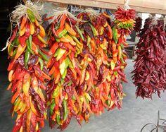 New Mexico chile ristras...makes me really really miss Santa Fe...<3