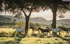 HERD IN THE SUNSET Equine photography by Ekaterina Druz